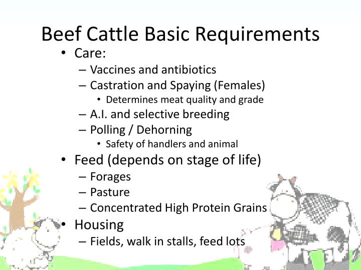Beef Cattle Basic Requirements
