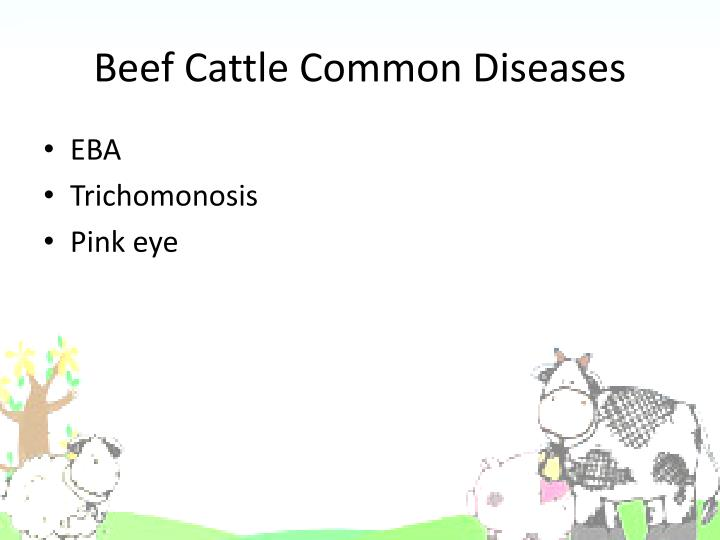 Beef Cattle Common Diseases