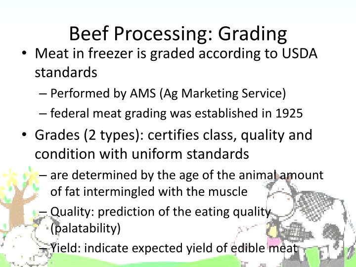 Beef Processing: Grading