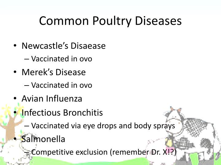 Common Poultry Diseases