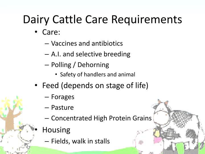 Dairy Cattle Care Requirements