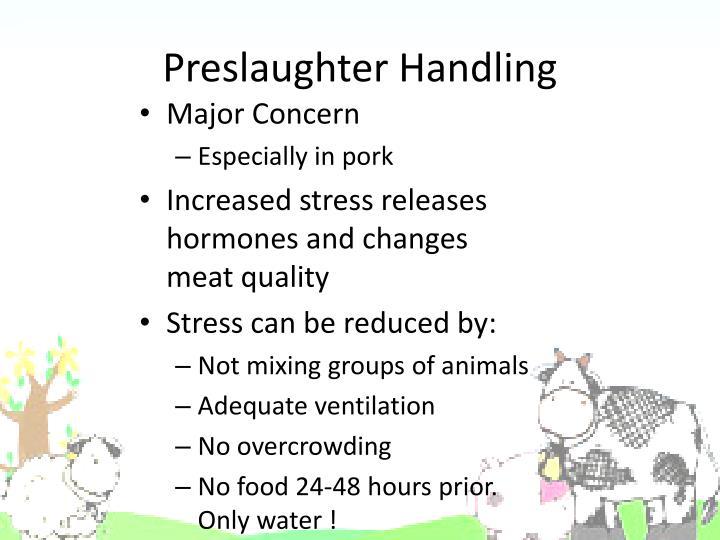 Preslaughter Handling
