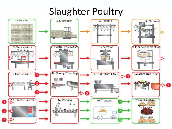 Slaughter Poultry