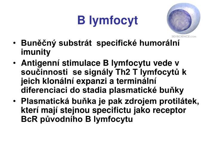 B lymfocyt