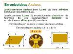 erronboidea azalera2