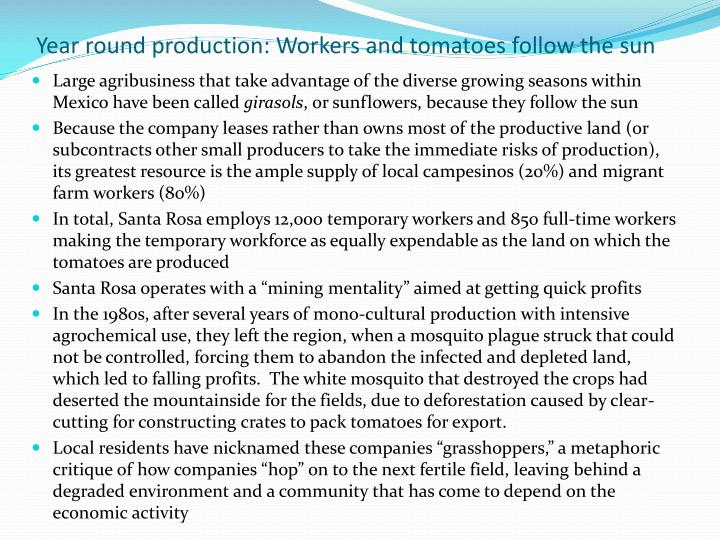 Year round production: Workers and tomatoes follow the sun