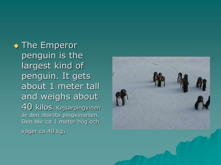 The Emperor penguin is the largest kind of penguin. It gets about 1 meter tall and weighs about 40