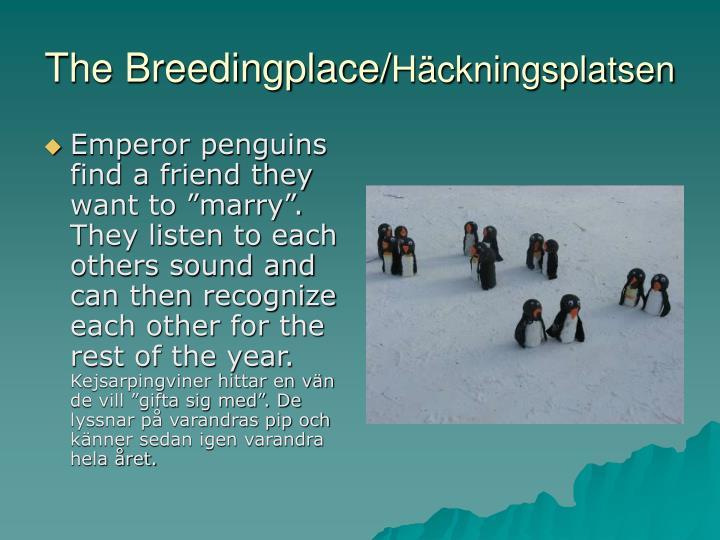 The Breedingplace/