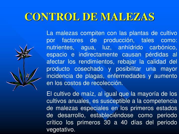 CONTROL DE MALEZAS