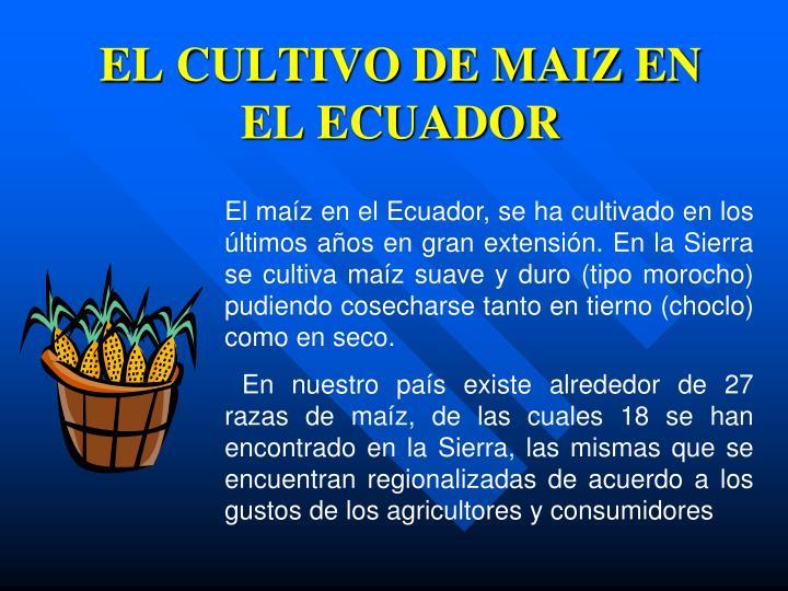 EL CULTIVO DE MAIZ EN EL ECUADOR