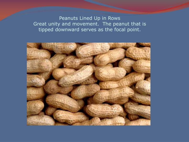 Peanuts Lined Up in Rows