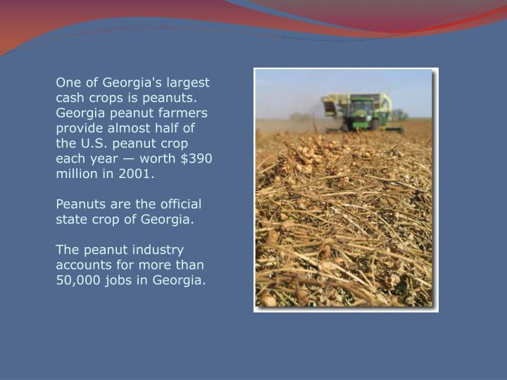 One of Georgia's largest cash crops is peanuts. Georgia peanut farmers provide almost half of the U.S. peanut crop each year — worth $390 million in 2001.