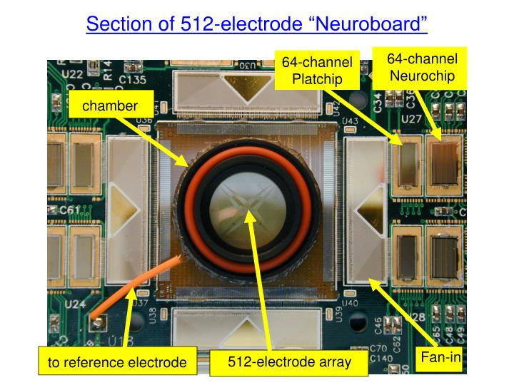 """Section of 512-electrode """"Neuroboard"""""""