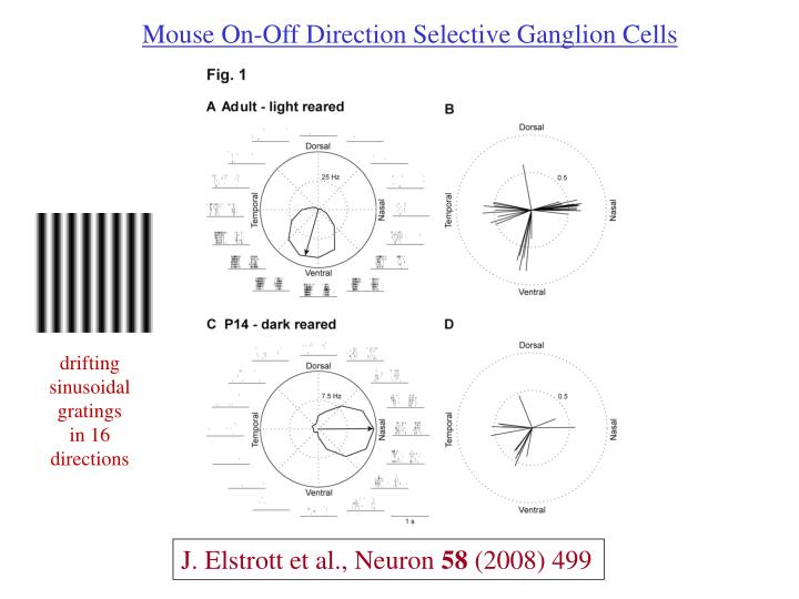 Mouse On-Off Direction Selective Ganglion Cells