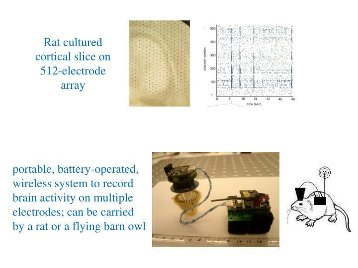Rat cultured cortical slice on  512-electrode array