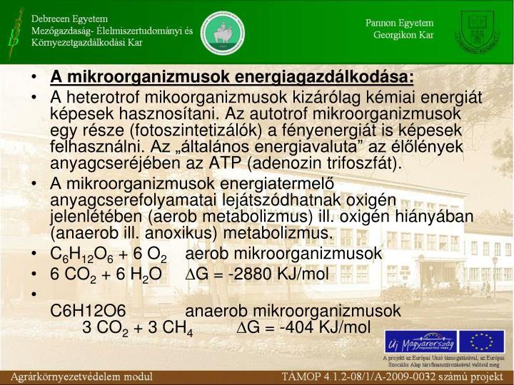 A mikroorganizmusok energiagazdlkodsa:
