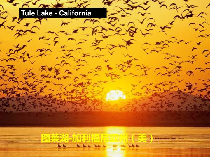Tule Lake - California