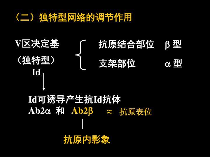 (二)独特型网络的调节作用