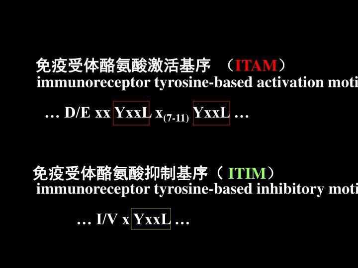 免疫受体酪氨酸激活基序