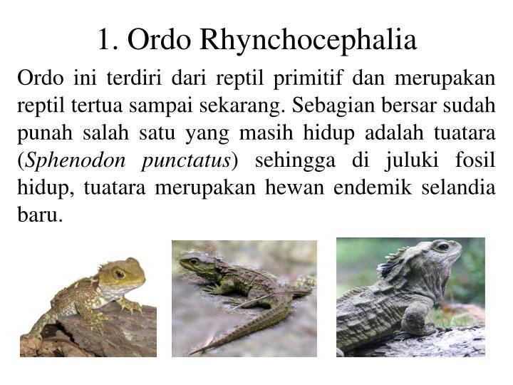 1. Ordo Rhynchocephalia