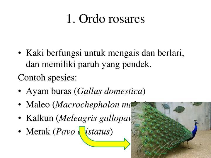 1. Ordo rosares
