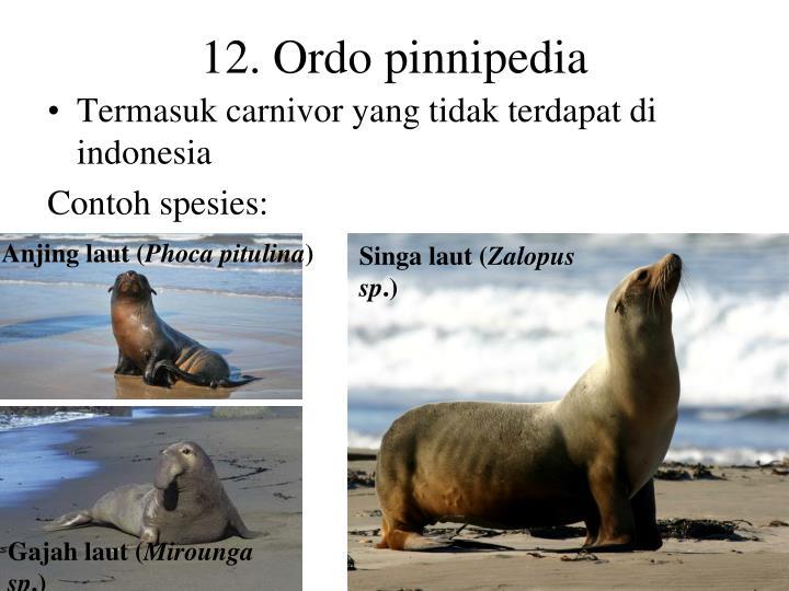 12. Ordo pinnipedia