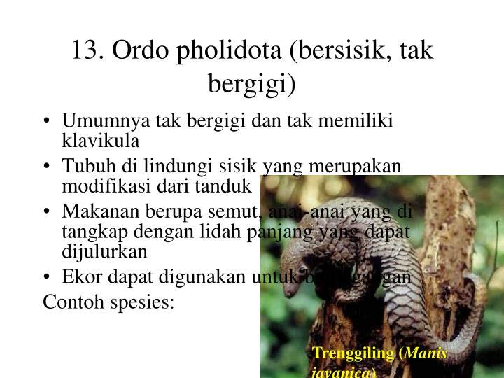 13. Ordo pholidota (bersisik, tak bergigi)