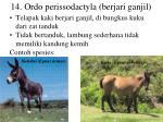 14 ordo perissodactyla berjari ganjil