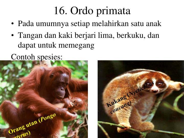 16. Ordo primata