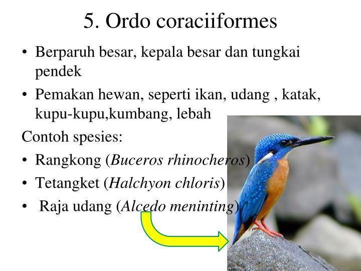 5. Ordo coraciiformes