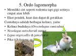 5 ordo lagomorpha
