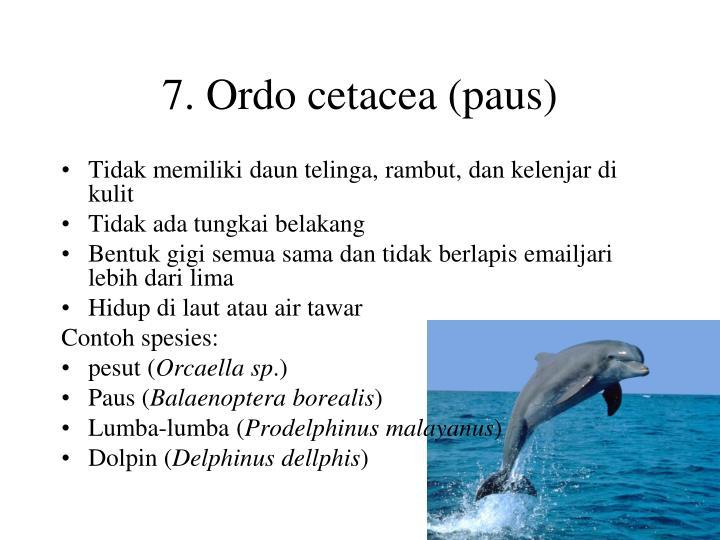 7. Ordo cetacea (paus)