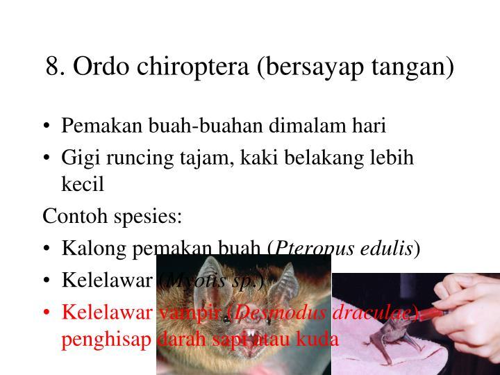 8. Ordo chiroptera (bersayap tangan)