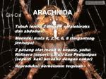 arachnida