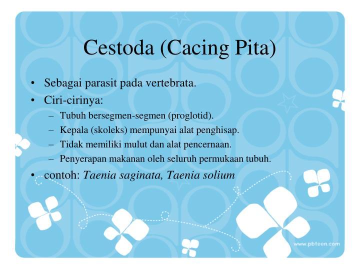 Cestoda (Cacing Pita)