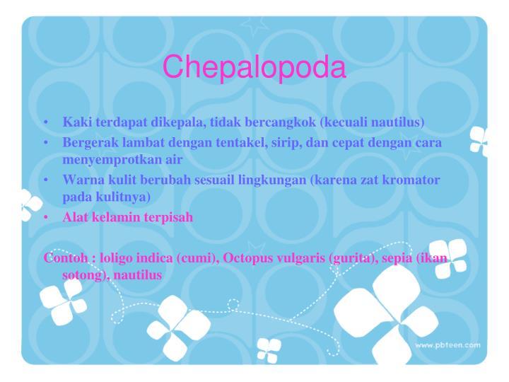 Chepalopoda