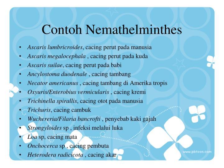 Contoh Nemathelminthes