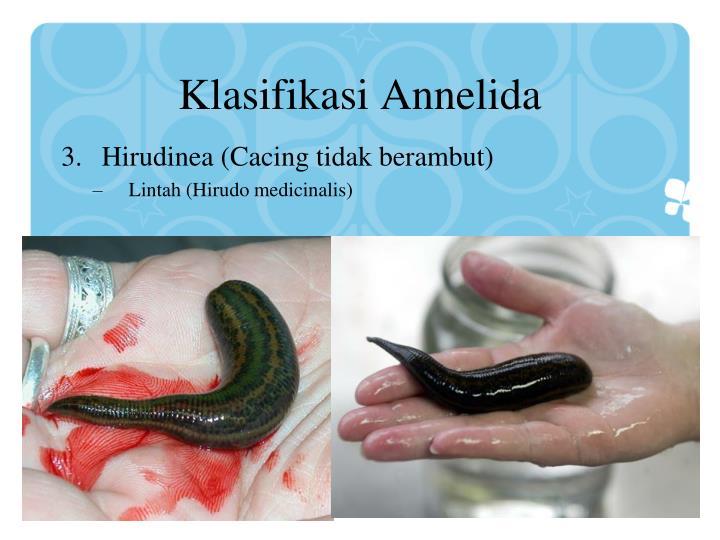 Klasifikasi Annelida