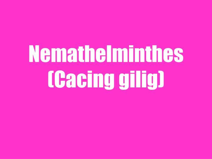 Nemathelminthes (Cacing gilig)
