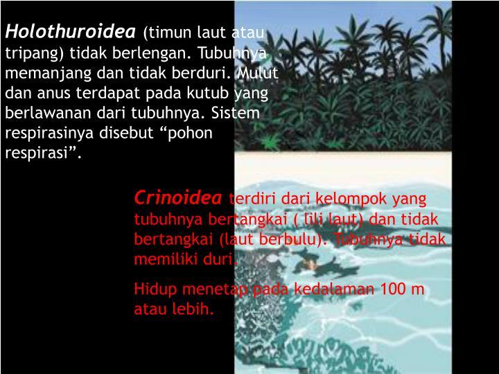 Timun Laut