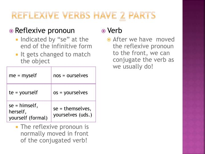 Reflexive verbs have