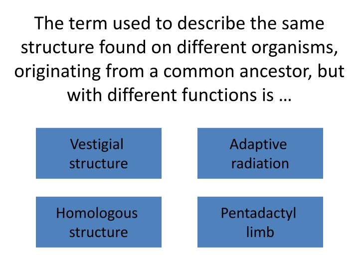 The term used to describe the same structure found on different organisms, originating from a common ancestor, but with different functions is …