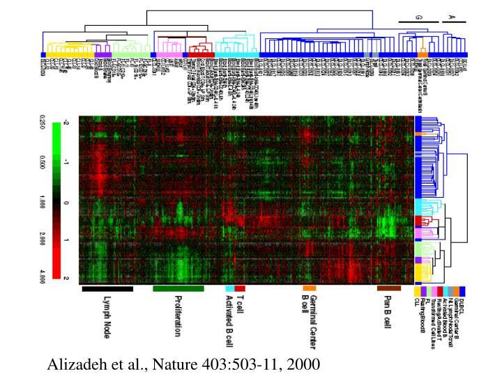 Alizadeh et al., Nature 403:503-11, 2000
