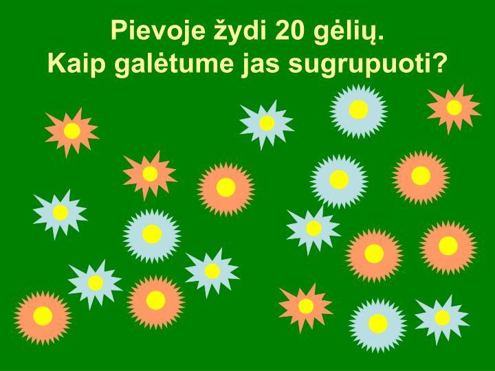 Pievoje žydi 20 gėlių.