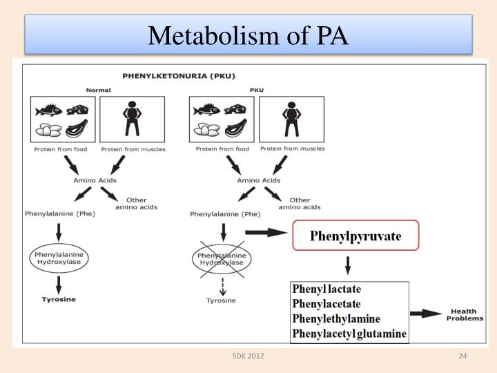 Metabolism of PA