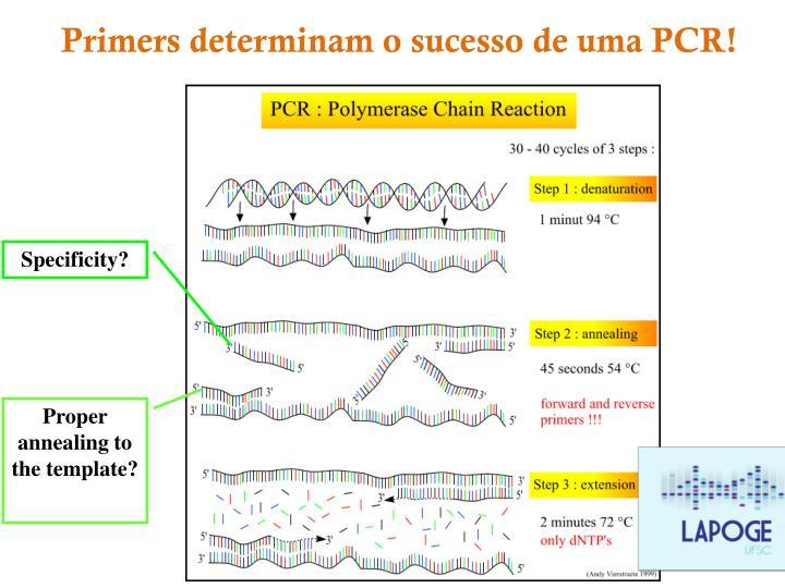 Primers determinam o sucesso de uma PCR!