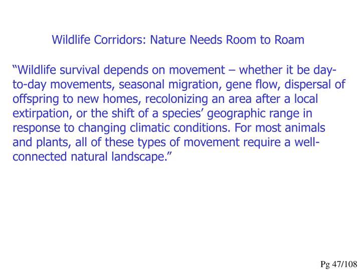 Wildlife Corridors: Nature Needs Room to Roam