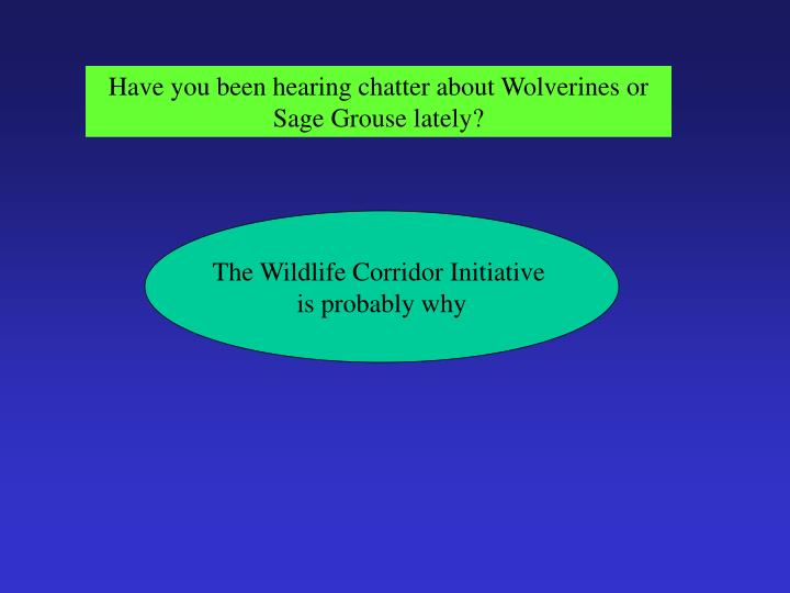 Have you been hearing chatter about Wolverines or Sage Grouse lately?