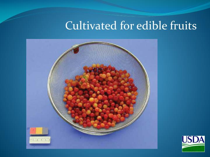 Cultivated for edible fruits