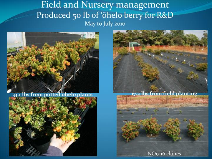 Field and Nursery management
